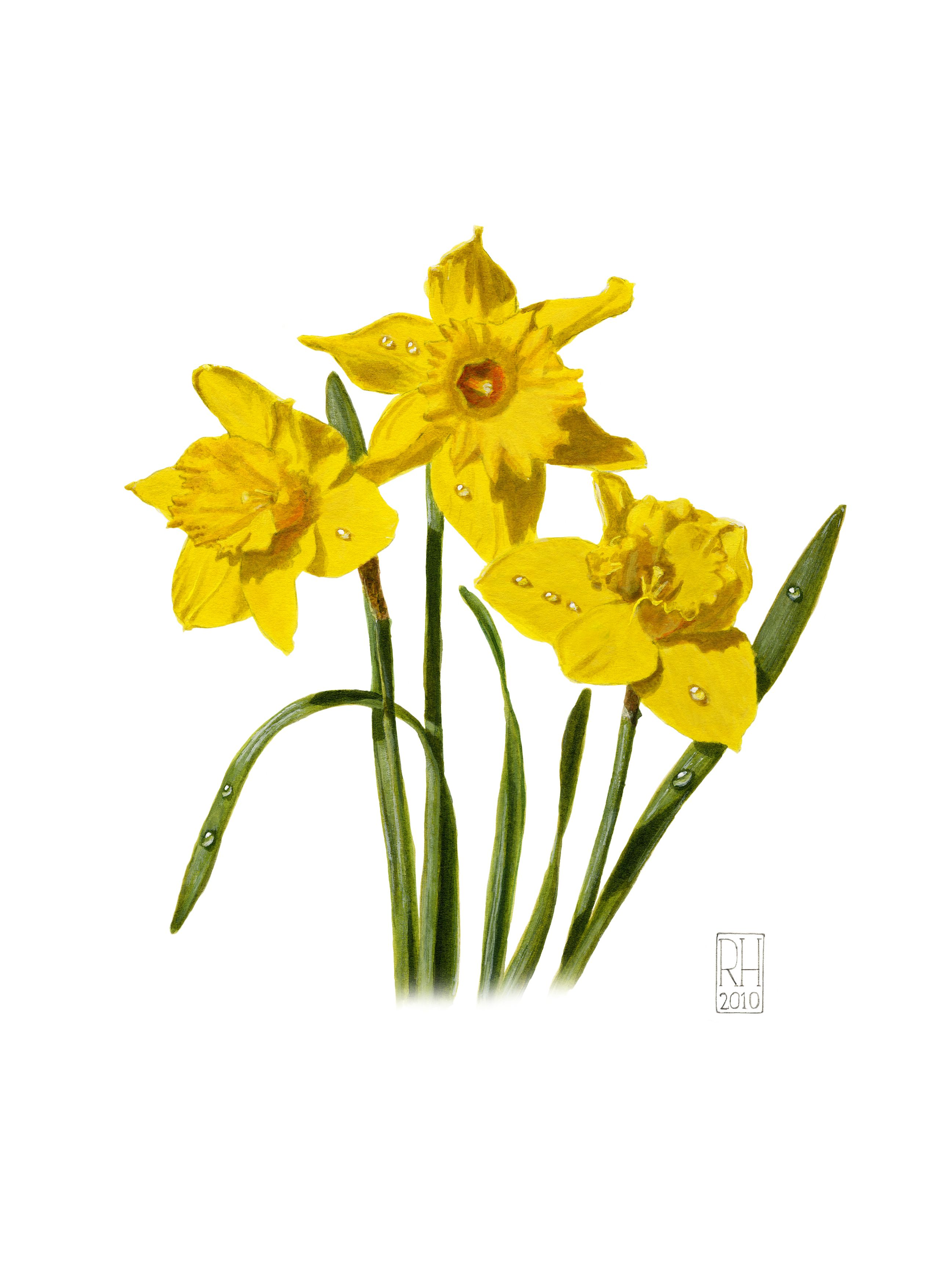 Painting - Daffodils