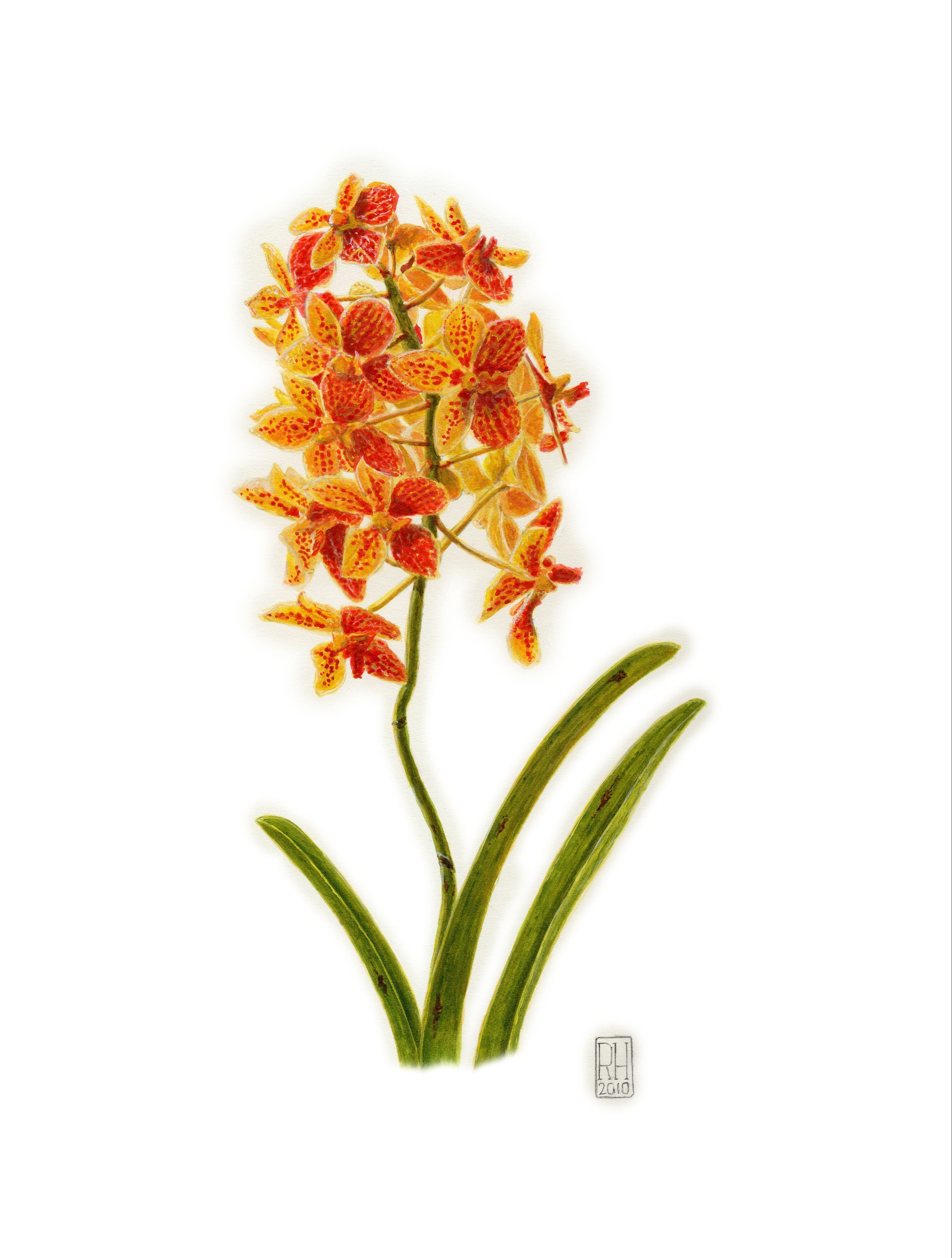 Painting - Orchid